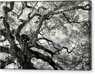 Reaching For Heaven Canvas Print by Karen Wiles