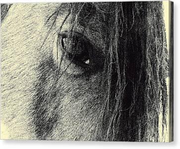 Read My Eyes Canvas Print by Patricia Keller