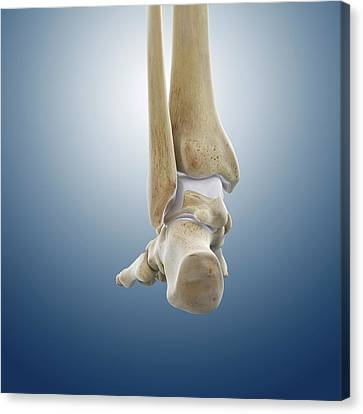 Rear Foot And Ankle Bones Canvas Print by Springer Medizin
