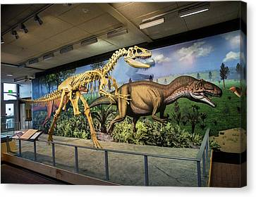 Reconstruction Of Allosaurus Canvas Print by Jim West