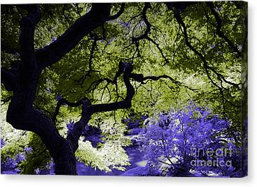Recurring Dreams Of Color Canvas Print by Marvin Blaine