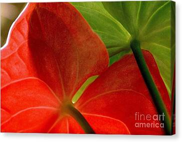 Red And Green Anthurium Canvas Print by Ranjini Kandasamy