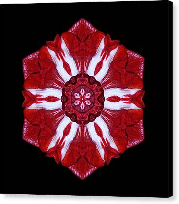 Red And White Amaryllis Iv Flower Mandala Canvas Print by David J Bookbinder