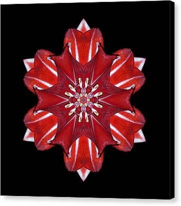 Red And White Amaryllis Vii Flower Mandala Canvas Print by David J Bookbinder