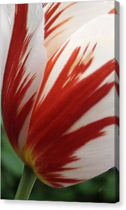 Red And White Tulip  Canvas Print by Ben and Raisa Gertsberg