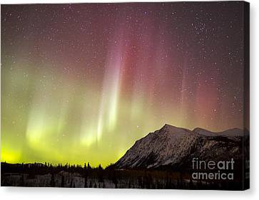 Red Aurora Borealis Over Carcross Canvas Print by Joseph Bradley