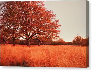 Red Autumn Canvas Print by Violet Gray