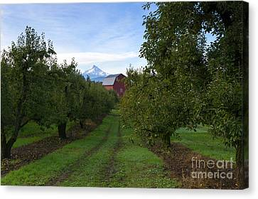 Red Barn Mountain Canvas Print by Mike Dawson