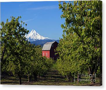 Red Barn View Canvas Print by Mike Dawson