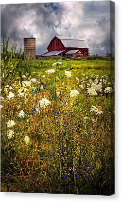 Red Barns In The Wildflowers Canvas Print by Debra and Dave Vanderlaan