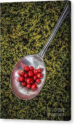 Red Berries Silver Spoon Moss Canvas Print by Edward Fielding