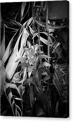 Red Bromeliad And Tricolor Gingers Bw Canvas Print by Rich Franco