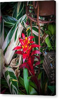 Red Bromeliad And Tricolor Gingers Canvas Print by Rich Franco