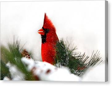 Red Cardinal Canvas Print by Christina Rollo