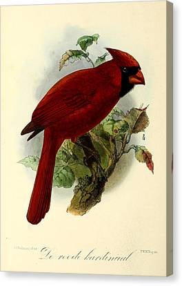 Red Cardinal Canvas Print by J G Keulemans