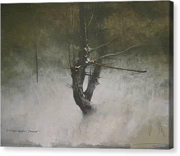 Red Cedar Canvas Print by Darryl Steele