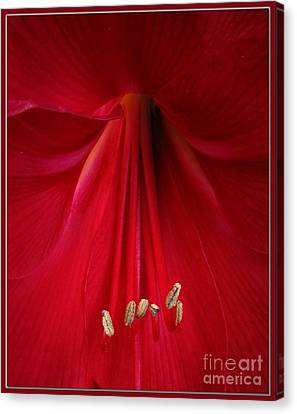 Red Canvas Print by Chris Anderson