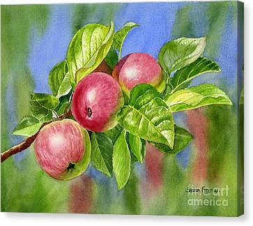 Red Cider Apples With Background Canvas Print by Sharon Freeman