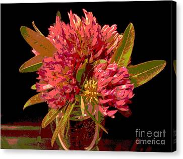 Red Clover 1 Canvas Print by Martin Howard