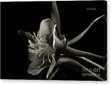 Red Columbine In Black And White Canvas Print by Karen Slagle