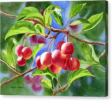 Red Crab Apples With Background Canvas Print by Sharon Freeman