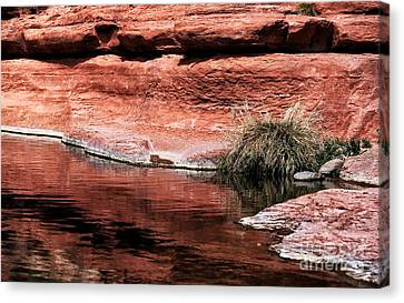 Red Creek Canvas Print by John Rizzuto