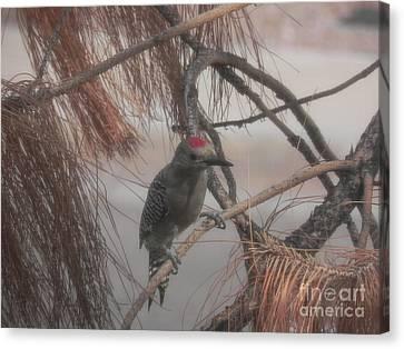 Red Crested Wood Pecker In Az Canvas Print by Chrisann Ellis