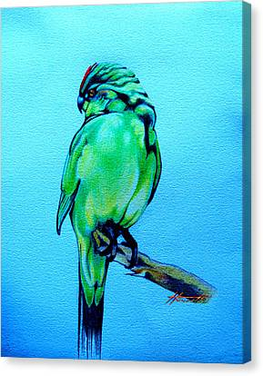 Red Crowned Parakeet Canvas Print by Patricia Howitt