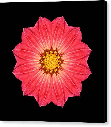 Red Dahlia Hybrid I Flower Mandala Canvas Print by David J Bookbinder