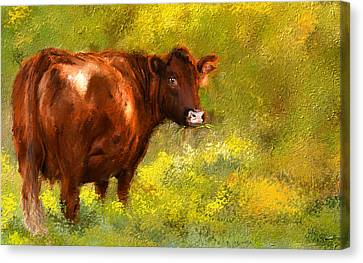 Red Devon Cattle On Green Pasture Canvas Print by Lourry Legarde