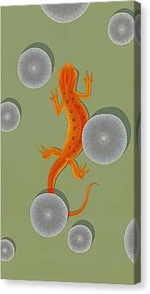 Red Eft Newt Canvas Print by Nathan Marcy