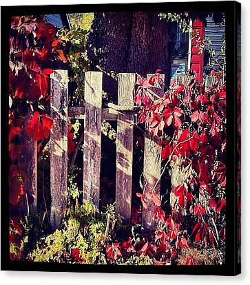 Red Entwined Fence  Canvas Print by Marcin and Dawid Witukiewicz