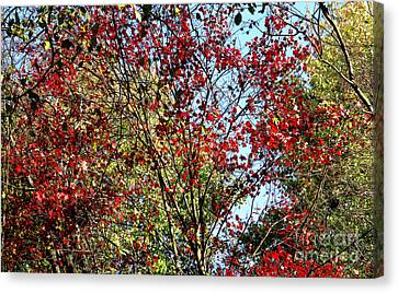 Red Fall Foliage Canvas Print by Tina M Wenger