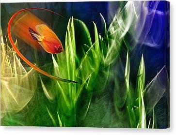 Red Fish In An Aquarium Canvas Print by   larisa Fedotova