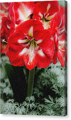 Red Flower With Starburst Canvas Print by Crystal Wightman