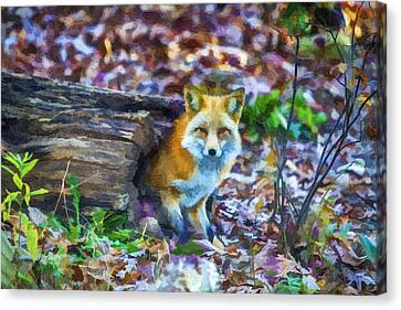 Red Fox At Home Canvas Print by John Haldane