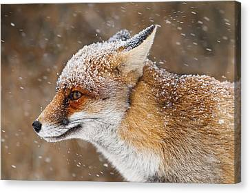 Red Fox In A Snow Storm Canvas Print by Roeselien Raimond