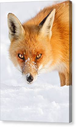Red Fox In The Snow Canvas Print by Roeselien Raimond