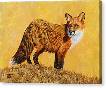 Red Fox Painting - Looking Back Canvas Print by Crista Forest