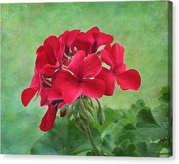 Red Geranium Flowers Canvas Print by Kim Hojnacki