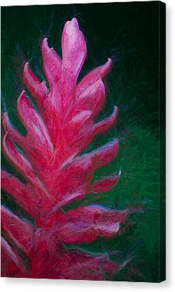 Red Ginger Canvas Print by John K Woodruff