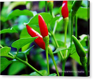 Red Hot.. Chillis Canvas Print by Ibrahim Mat Nor