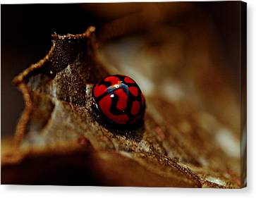 Red Lady Bug Canvas Print by Isabel Laurent