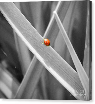 Red Ladybird Canvas Print by Chalet Roome-Rigdon