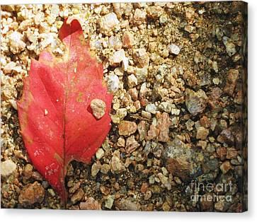 Red Leaf Canvas Print by Venus