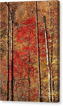 Red Leaves Canvas Print by Patrick Shupert