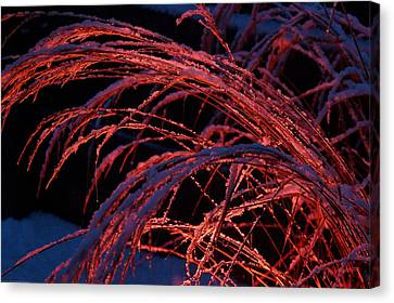 Red Light In Snow-heavy Grass Canvas Print by Mick Anderson