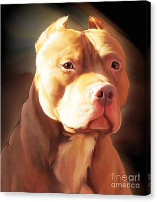 Red Pit Bull By Spano Canvas Print by Michael Spano