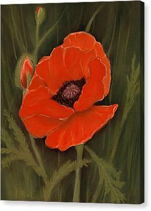 Red Poppy Canvas Print by Anastasiya Malakhova
