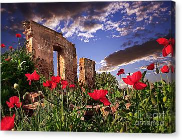 Red Poppy Field Canvas Print by English Landscapes